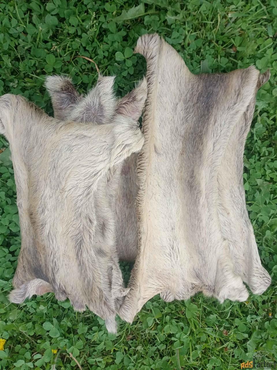 Кисы (камус) лосинные