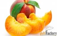 Саженцы персика от производителя