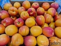 Продаем абрикос