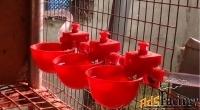 чашечные поилки для птицы