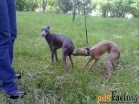 инструктор по вязкам собак