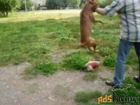 инструктор по индивидуальной дрессировке собак. зоопсихолог.