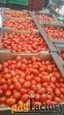 продаем томаты