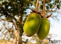 баобаб порошок мякоти плодов из западной африки