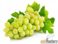 соковыжималка пресс для фруктов, вилен 25л (дуб)