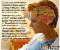 Профессиональная система восстановительной IT-медицины/Эксклюзив