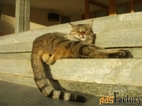кастрация котов на дому в балаково