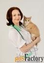 консультация ветеринара онлайн