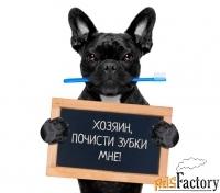 чистка зубного камня у собак мини-пород в балаково