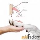 стрижка когтей у кошек и собак в балаково