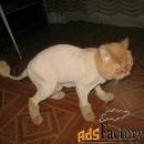 стрижка кошек на дому в балаково