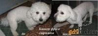 стрижка собак на дому в балаково