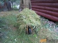 покос травы бурьяна сухостоя