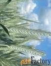 Семена тритикале озимой Тихон, Хлебороб.
