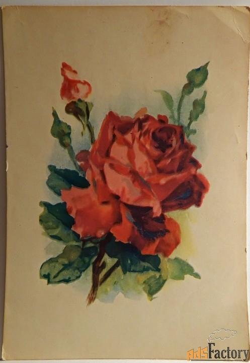 открытка роза. 1950-60-е годы