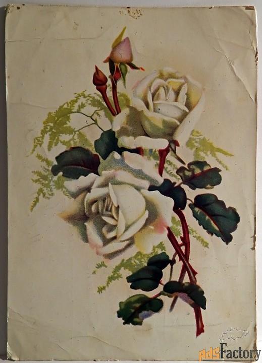 открытка розы. таллин. 1957 год