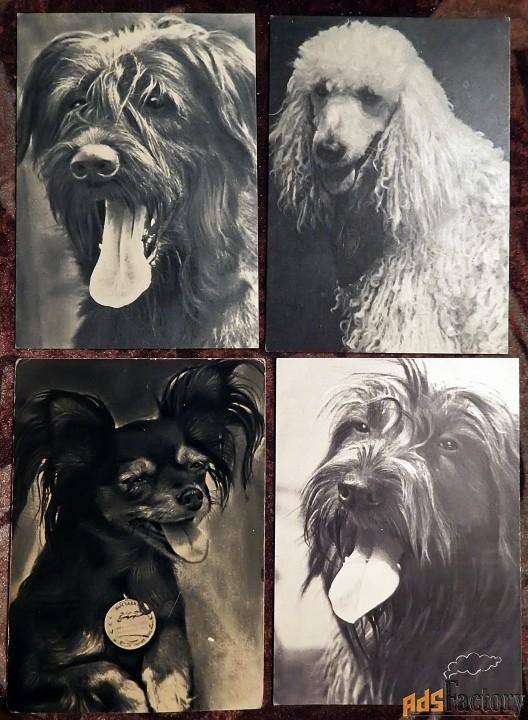 открытки породы собак (7 шт.). 1969 год