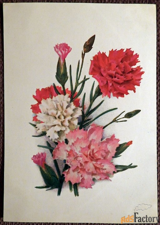 открытка. худ. колганов гвоздики. 1974 год