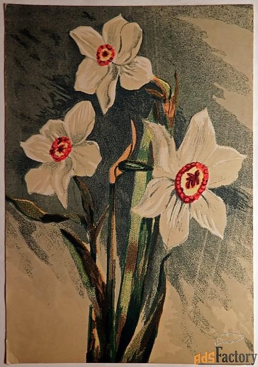 открытка. худ. коротков нарцисс. 1948 год