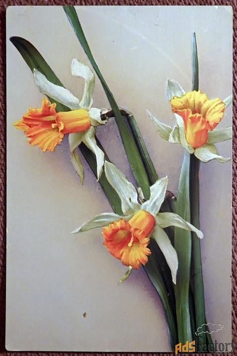 Антикварная открытка Нарциссы