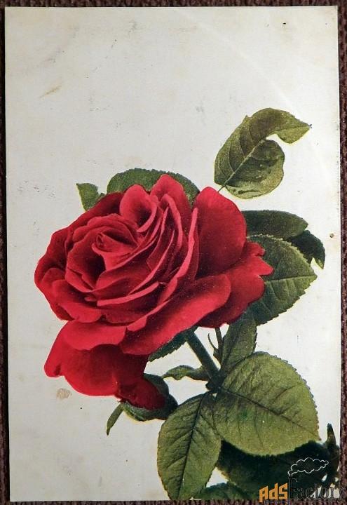 Антикварная открытка Роза. Т-во Голике и Вильборг. Петроград