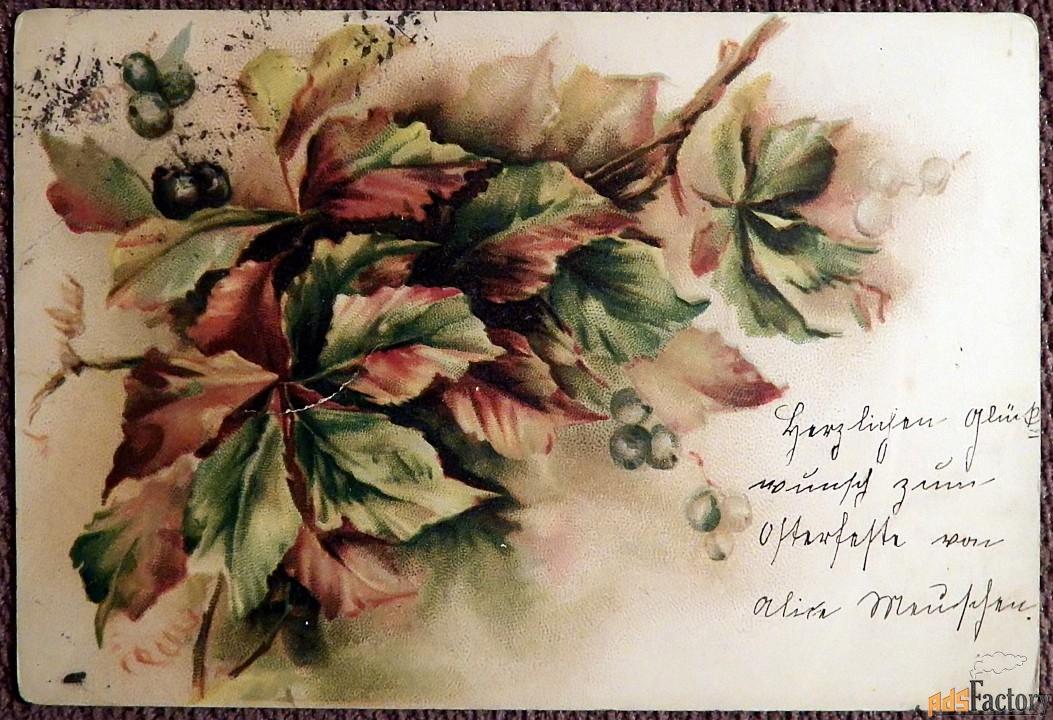 Антикварная открытка Виноград