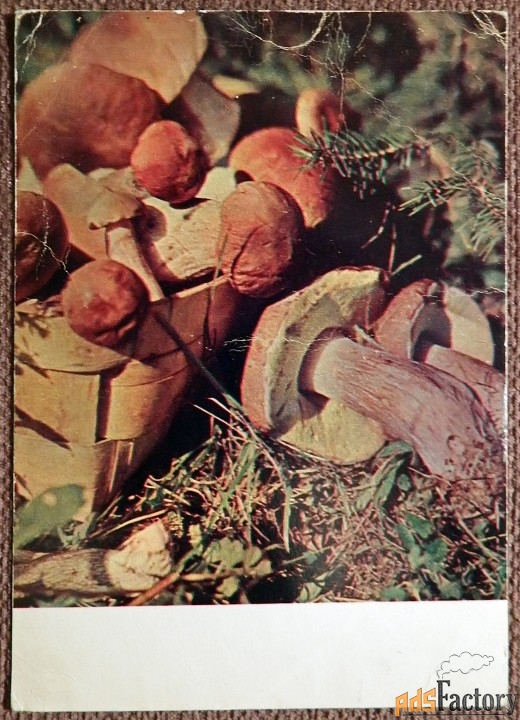 Открытка Грибы белые. 1969 год