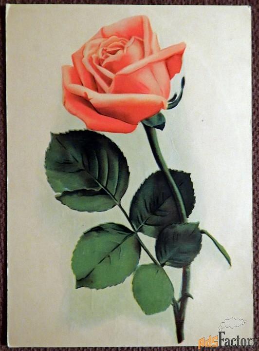 Открытка Роза. Таллин. 1969 год