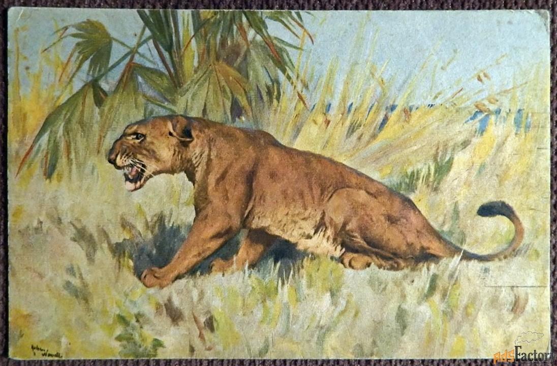 Антикварная открытка Львица