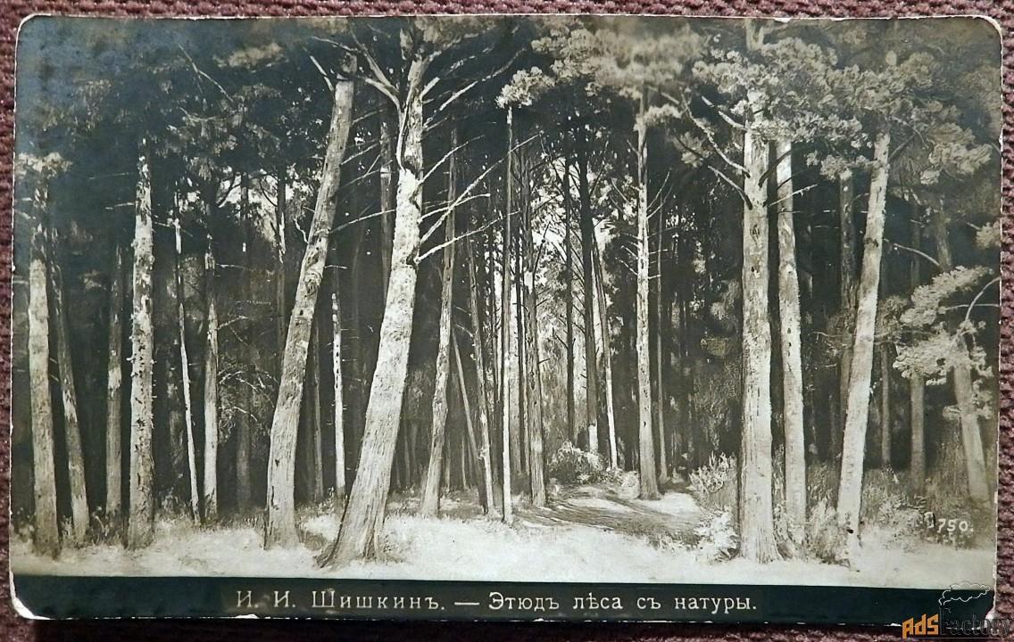 Антикварная открытка. И. Шишкин Этюд леса с натуры