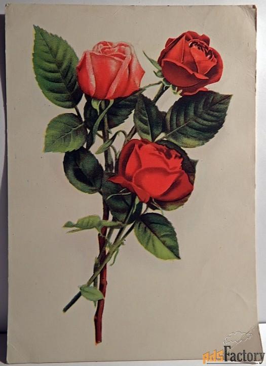 Открытка Розы. Филателистическая контора. 1955 год