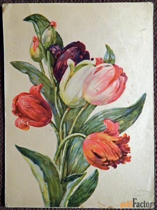 Открытка. Худ. Хвостенко Тюльпаны. 1956 год