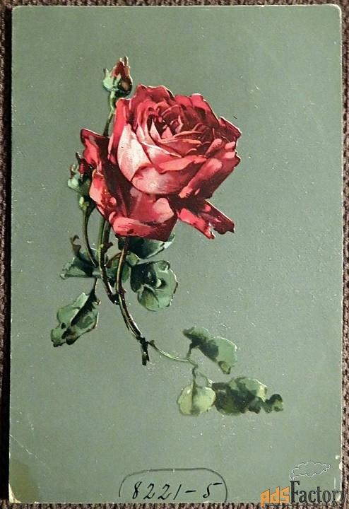 Антикварная открытка Красная роза