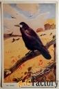 антикварная открытка грач