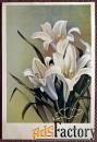 открытка лилии. 1951 год