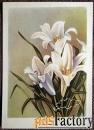 открытка лилия. таллин. 1956 год