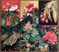 набор открыток комнатные растения. 1983 год