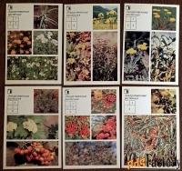 набор открыток «ваш приусадебный участок. лекарственные растения»
