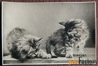 Открытка Два котенка. 1956 год