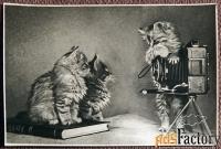Открытка Котята. Фотоаппарат. 1956 год