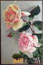 Антикварная открытка Розы