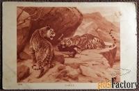 Антикварная открытка Тигры