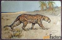 Антикварная открытка Ягуар