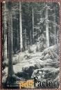 Антикварная открытка. Шишкин Дебри