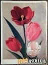 Открытка. Худ. Ряховский Тюльпаны. 1974 год