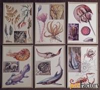 Набор открыток Заповедные животные и растения. 1983 год