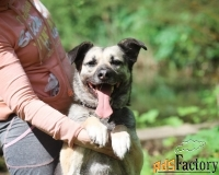 Юна- собака-улыбка верит в свою счастливую звезду