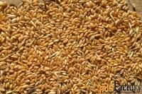 реализуем пшеницу 3, 4, 5 класса