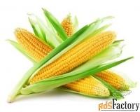 реализуем кукурузу 1, 2 класса
