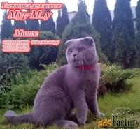 Передержка котов в Минске